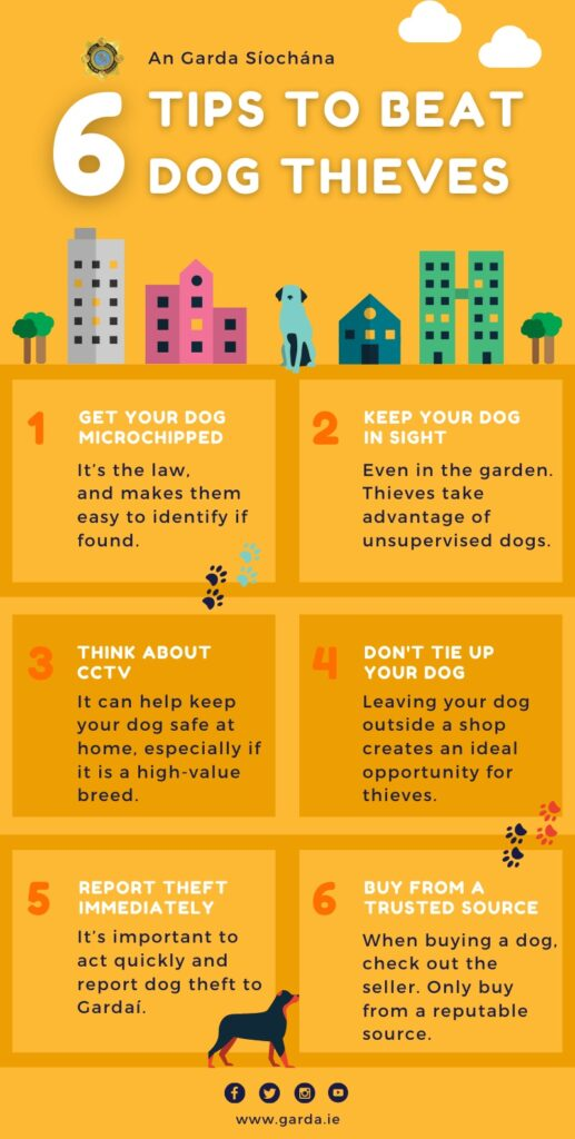 6 Tips to beat dog thieves